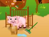 Soin de bébés cochons