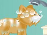 Toiletteuse chien et chat