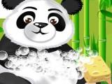 Soin d'un panda