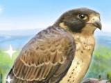 Brave faucon