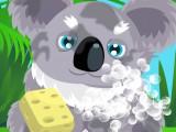 Soin d'un koala