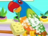 Perroquet domestique 2