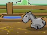 Elevage de cheval