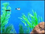 Un aquarium comme vrai