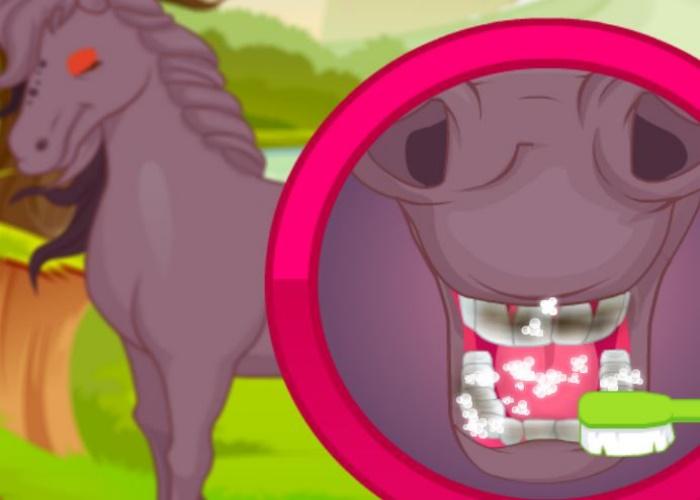 Soin de mon cheval 2